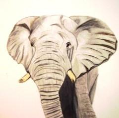 Elefant in Grautönen gemalt