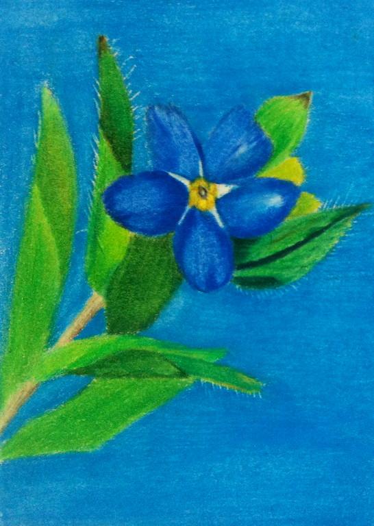 Menominee flower 1