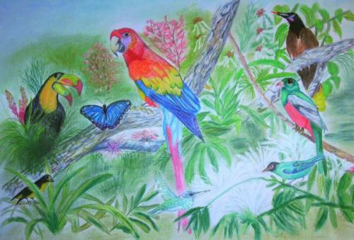 Artenvielfalt im Regenwald