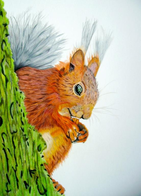 Eichhörnchen nach einem Foto von Georg Dorff aus der FC