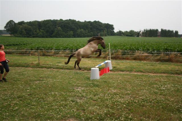 Freispringen 2008