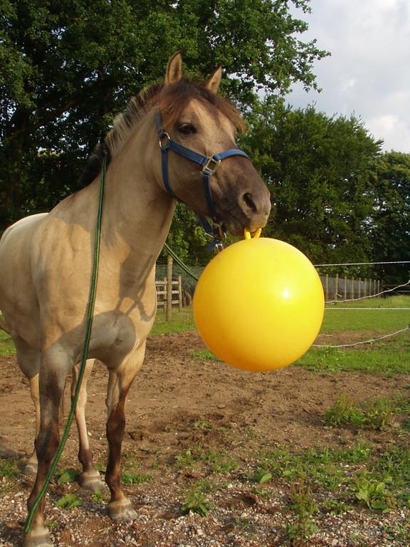 Ball apportieren