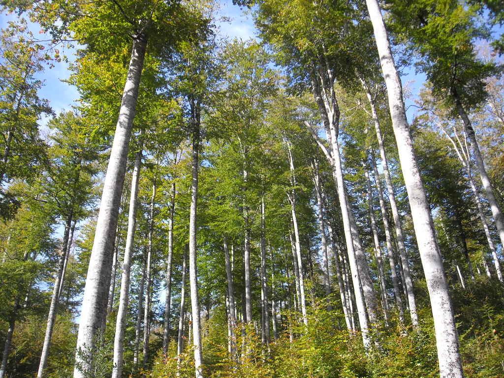 Majestueuse forêt sur le circuit.