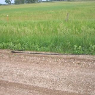 Serpiente de cuerda en el camino