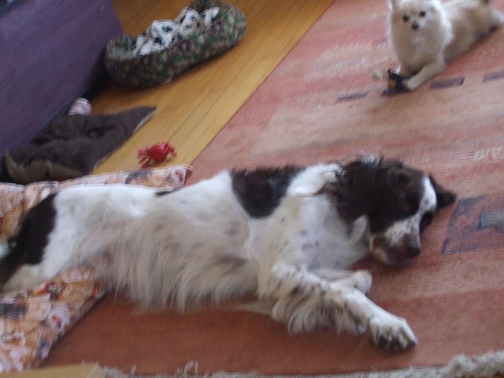 Quel vie de chien!