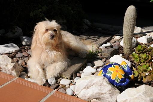 Snoopy en Málaga...Él es Malagueño