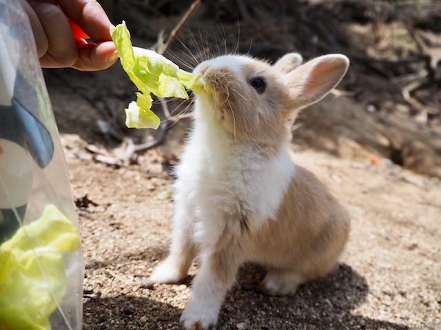 生野菜の方が好きそう♡