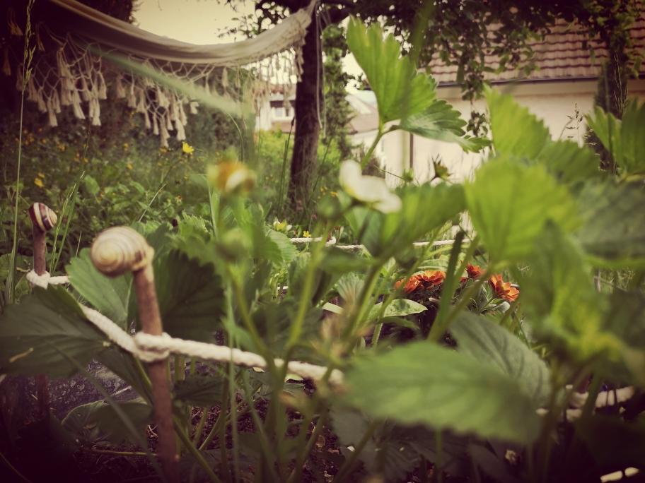 diy, kinder-beet, garten mit kinder, minibeet, kleinbeet, urban gardening, deko, deko-idee, schneckenzaun, kleines beet im garten, raumwunder, anpflanzen, giessen, ernten, beet in der wanne, beet im zuber