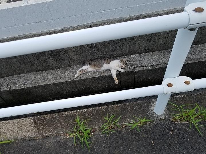 野良猫を見習おうw