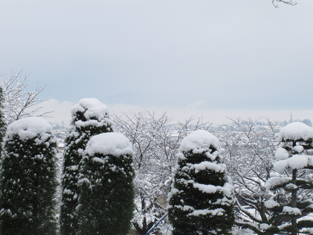 雪の帽子をかぶっている家族。(後ろ向き)