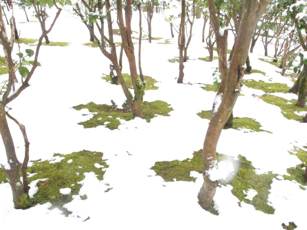 白い雪×緑の苔