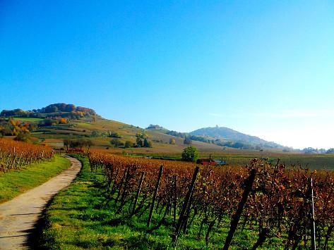 Weg in den Bergsträßer Weinbergen