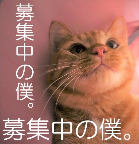 保護猫、子猫のりう