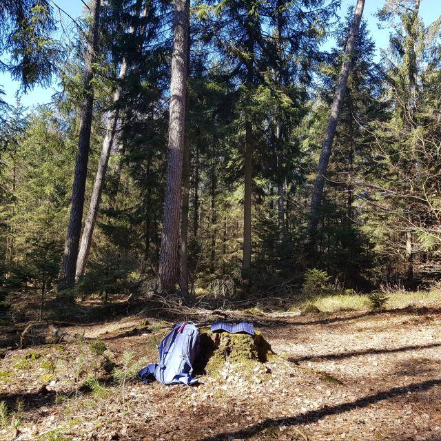 Von Tempounterschieden und Waldzwergen