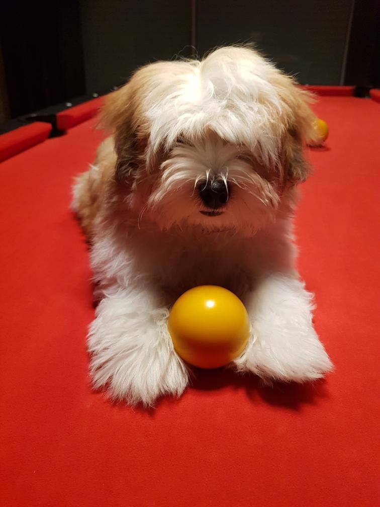 j'adore jouer à la balle
