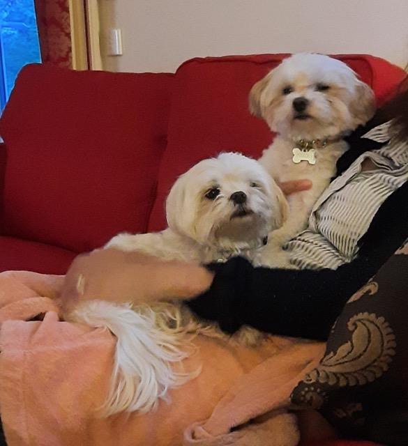 vive le canapé avec notre maîtresse