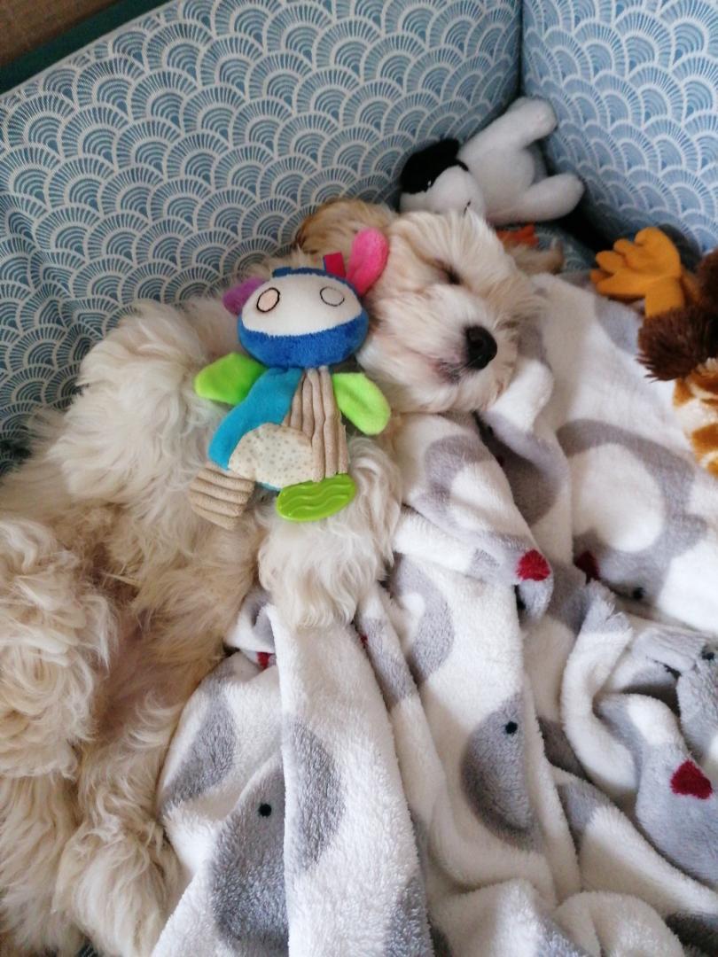 grose sieste, je suis un bébé...