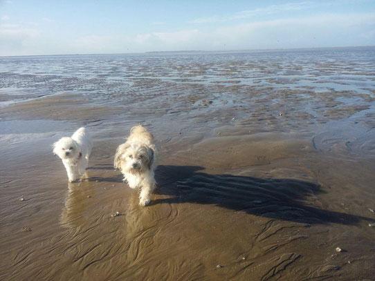 Litzie et Ginger les pattes dans l'eau