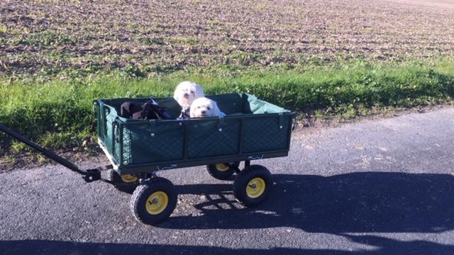 Balade en chariot pour les retraités