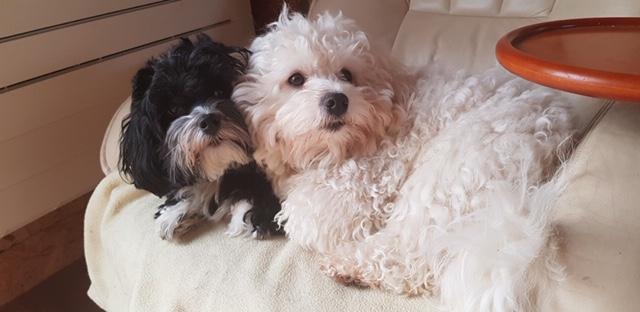 Prince et sa nouvelle chérie Miya