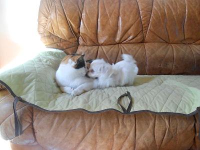 Tina et le bébé Maltais