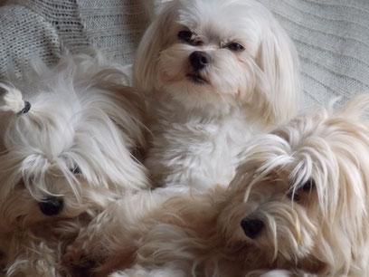 Frimousse, Macho et Ginger