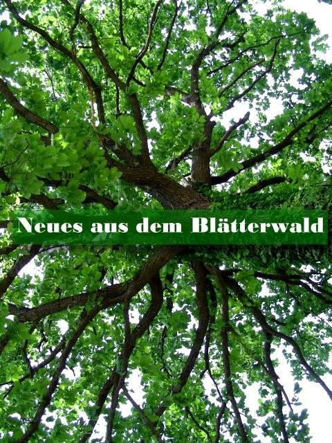 """Baumkrone v. Tom Tost - Illustration zu """"Neues aus dem Blätterwald"""""""