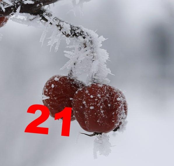 "21.12. Geli, ""Zieräpfelchen gefrostet"", CC-Lizenz (BY 2.0) http://creativecommons.org/licenses/by/2.0/de/deed.de"