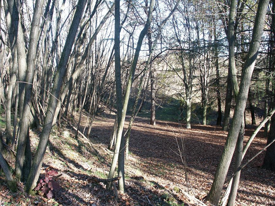Montello's woods