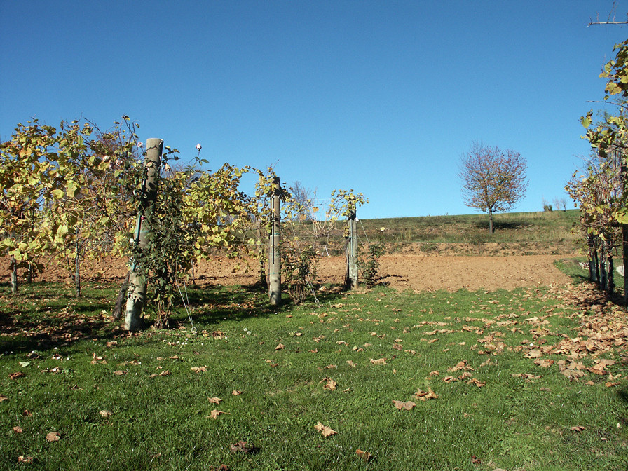 Vineyards on the Montello