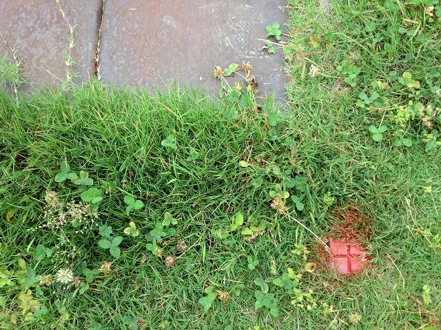 桐生市川内町2丁目 売り土地 土地の境界 国土調査の結果の杭 芝生のなか
