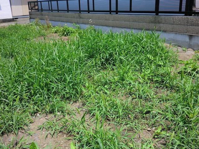 桐生駅前パーキング隣の土地の除草