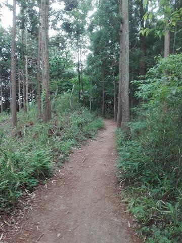 桐生市 吾妻山登山① まだ平坦な道