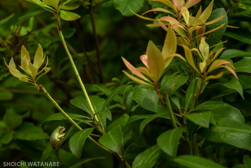 ここにもまたカエルが。なかなか良いフォルム。  Nikon D810 + AF-S NIKKOR 24-120mm f/4G ED VR