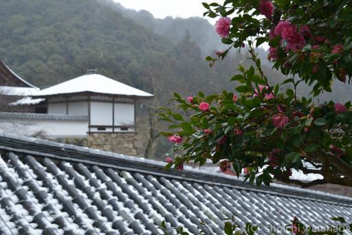 長谷寺 山茶花