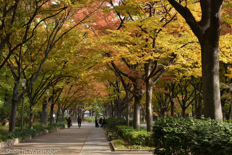 靭公園に立ち寄って紅葉の撮影をしてきました。