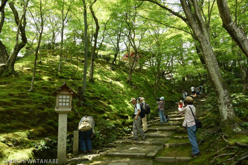 ご覧のとおり、緑のとっても豊かな季節です。  Nikon D810 + AF-S NIKKOR 24-120mm f/4G ED VR