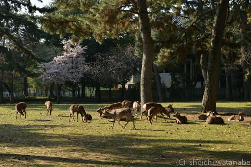 鹿が一箇所にたくさん・・・
