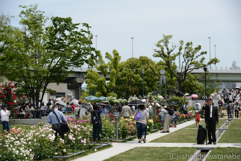 中之島公園もバラが見頃。ごらんの通りたくさんの人でにぎわっていました。