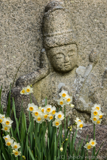 石仏と水仙