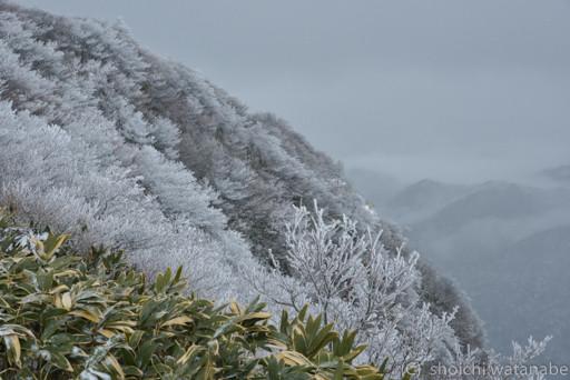 御在所岳 見事な樹氷です!
