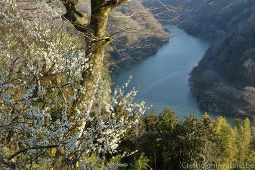 メインの見晴らし台からの梅はまだまだでした。それ以外のところは五分咲きということで十分写真が撮れます