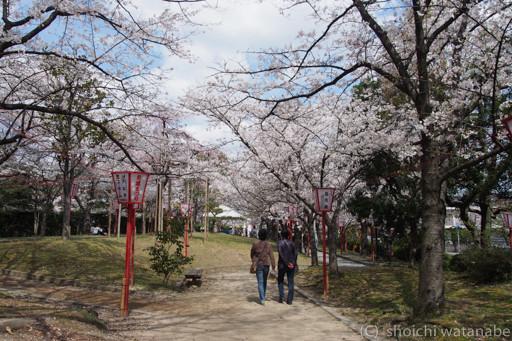 近鉄郡山駅周辺。このあたりは桜の時期とてもにぎわいます。