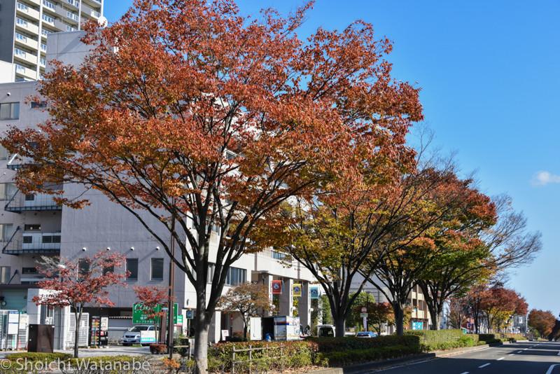 風が吹くと昼でも寒いです。街路樹もいい感じの色に染まっていました。