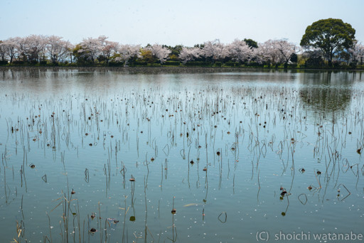 大沢池の風景