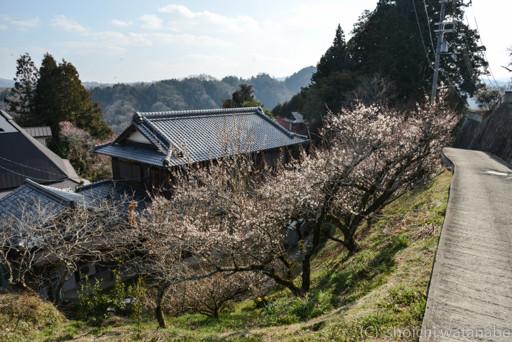 こういった風景がいかにも 奈良という感じです