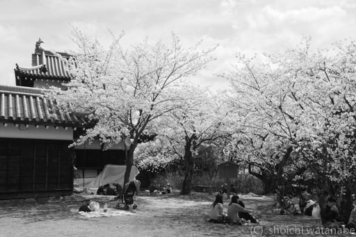 城址公園は開放されていて、平日ですが多くの方が花見を楽しんでいました