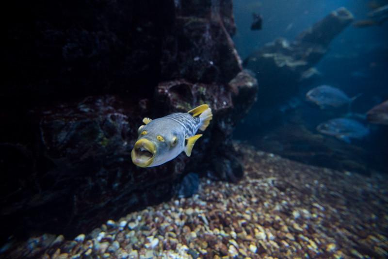 14mmでフグ撮りです。厚みのある魚は撮りやすいです。