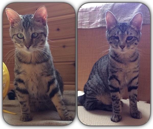 子猫のタマちゃん&ユメちゃん