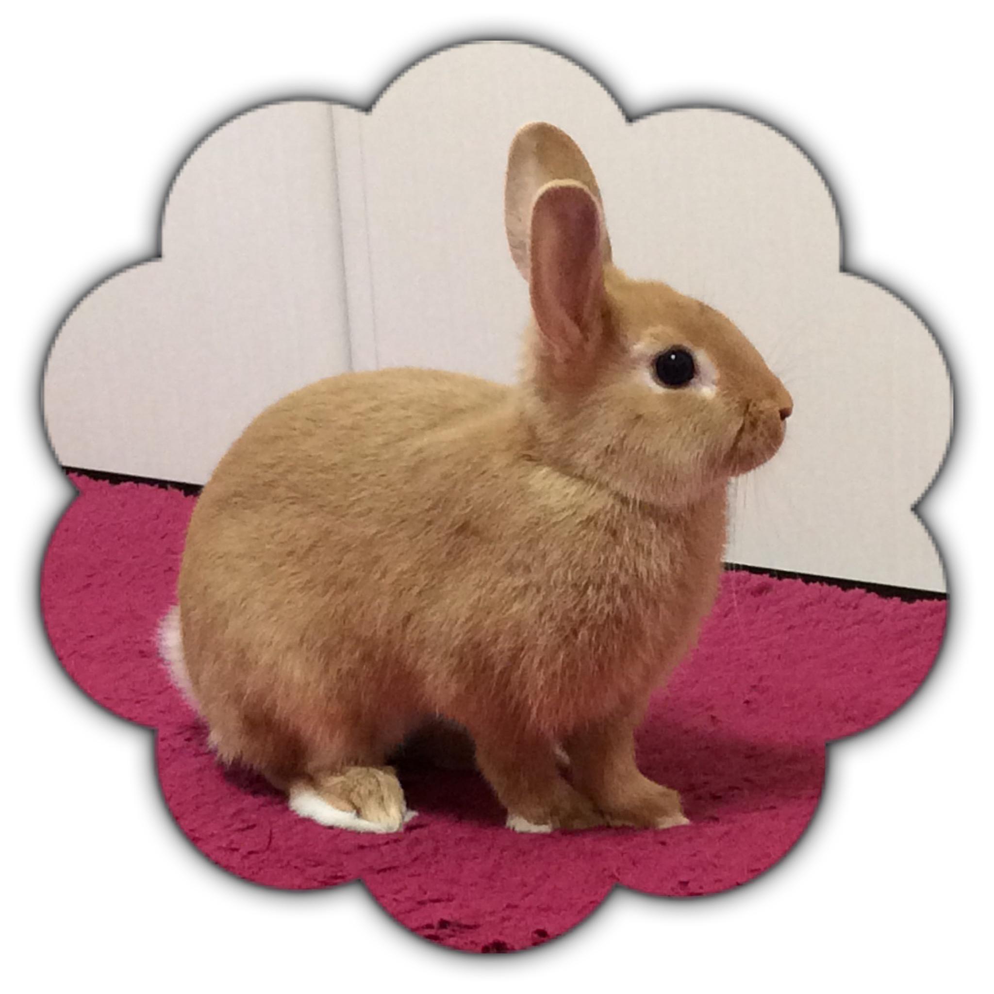 子ウサギ  きなこちゃん